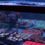 coral frag tank