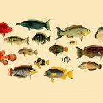 John Whitchurch Bennett's Forgotten Reef Fish Masterpiece