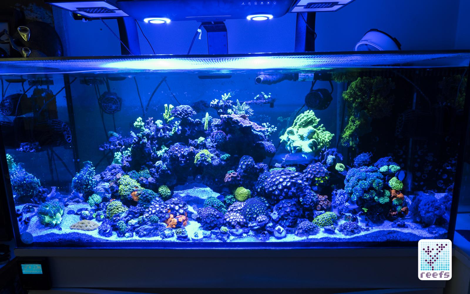 cobalt aquatics c ray 200 led light the definitive review reefs com