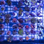 """Coral Road Trip"" – Long Island Reef Association 2018 Frag Swap"