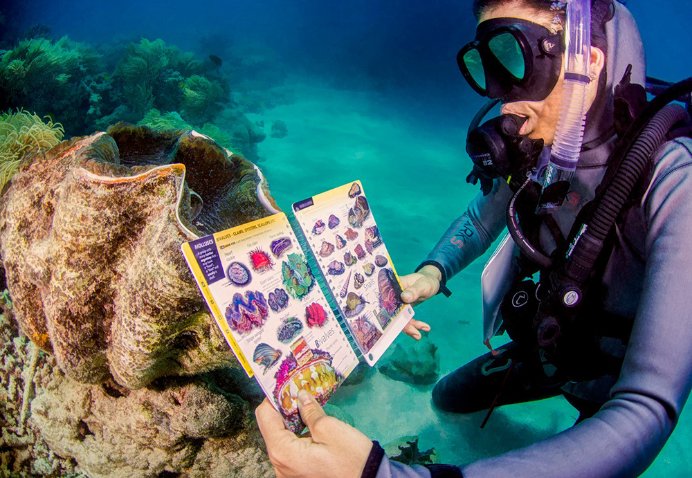 reef finder, BYO guides