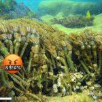 Stupid Aquarist Releases Blue Xenia & Clove Polyps In Brazil