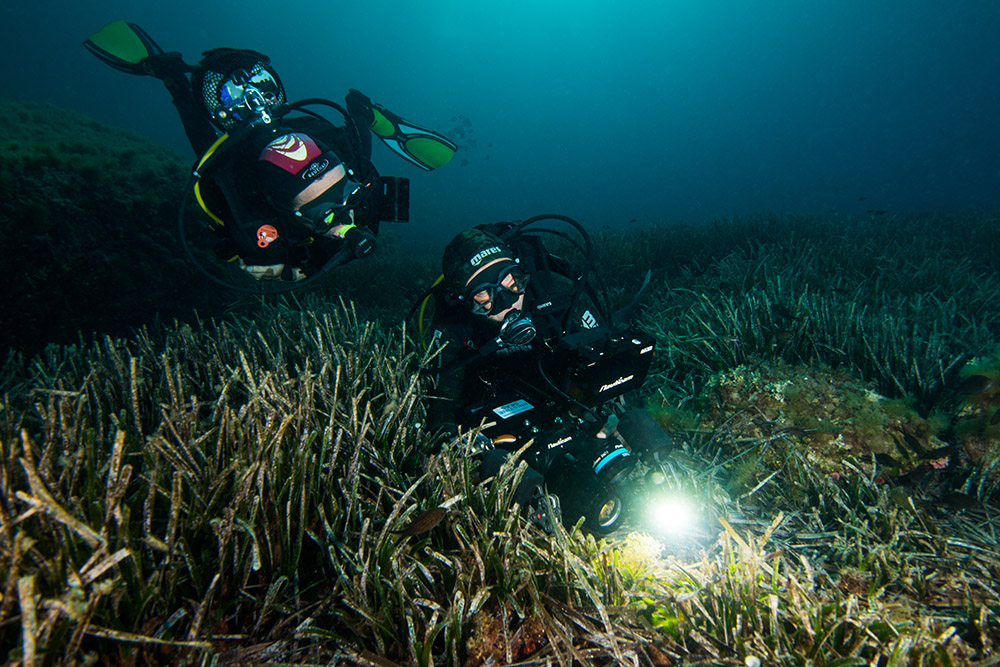 seagrass, divers