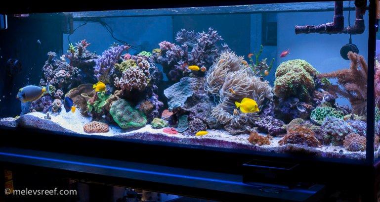 melev reef tank