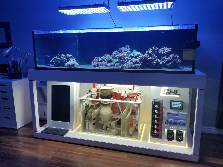 high end reefing kyle elder s 200 gallon reef reefs com