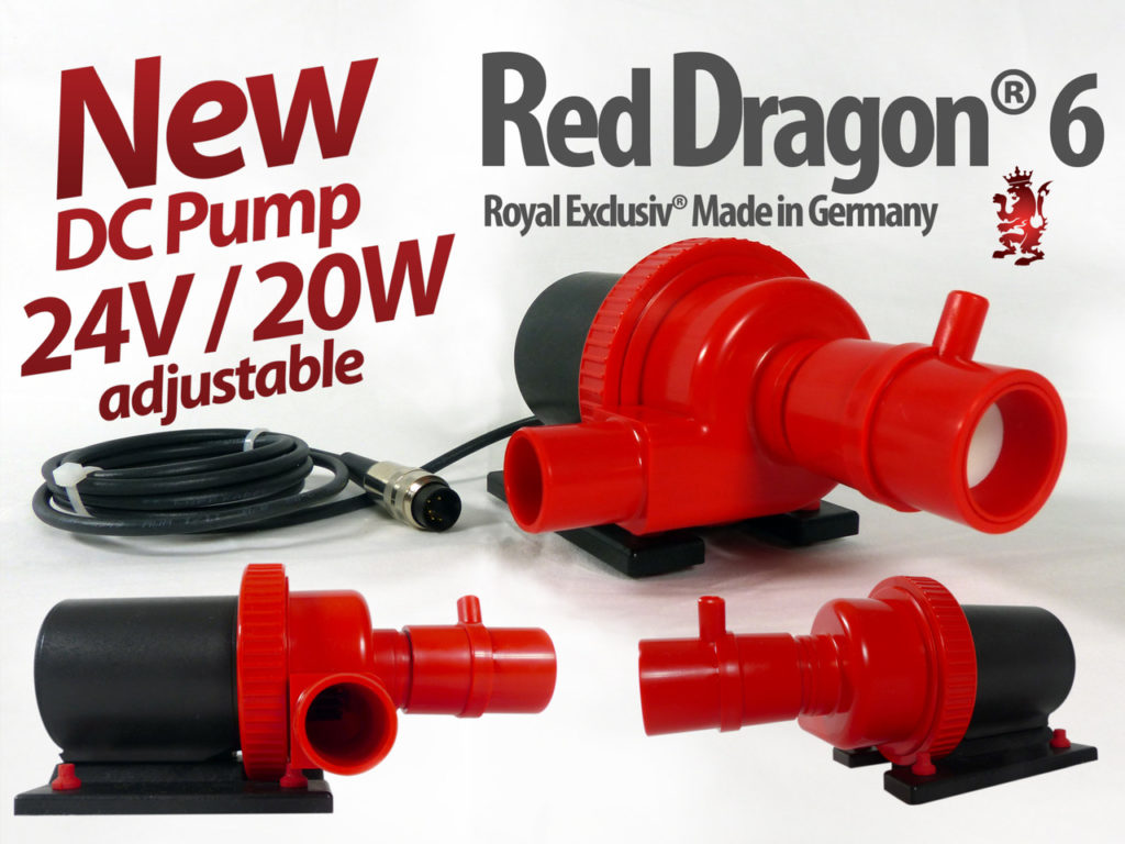 royal exclusiv red dragon