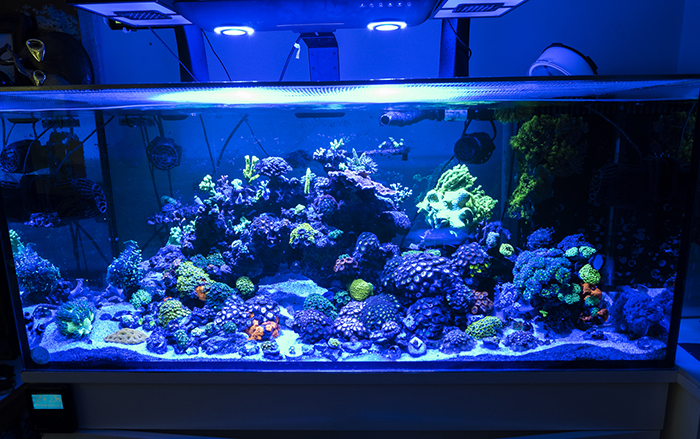review cobalt aquatics c ray 200 led light reefs com