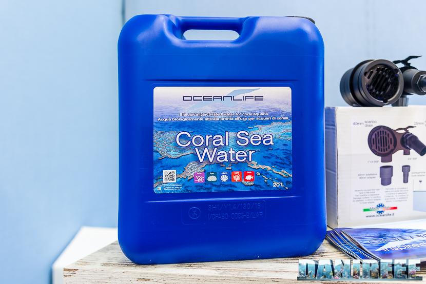 oceanlife coral sea water