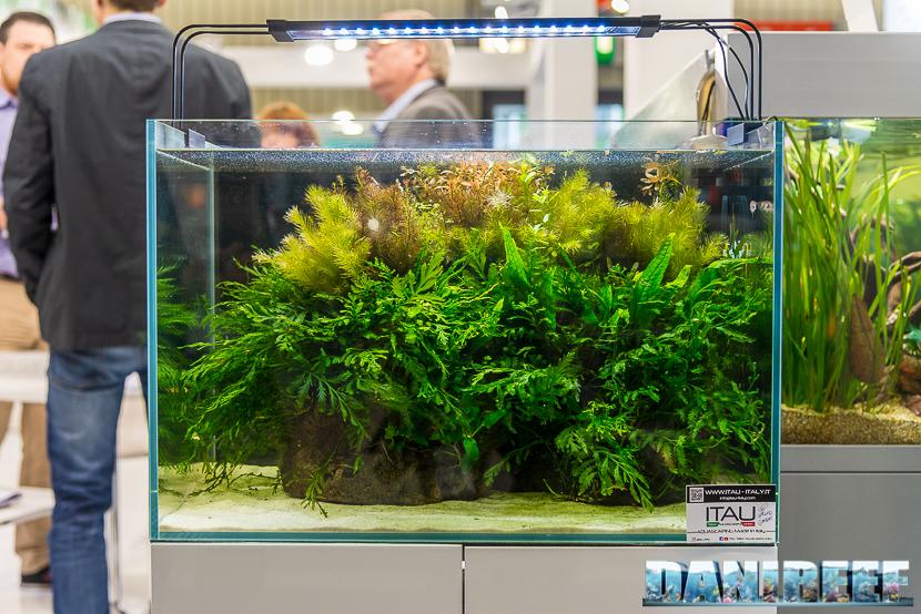 amtra aquarium freshwater