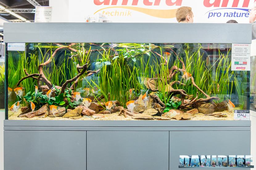 amtra aquarium angelfish