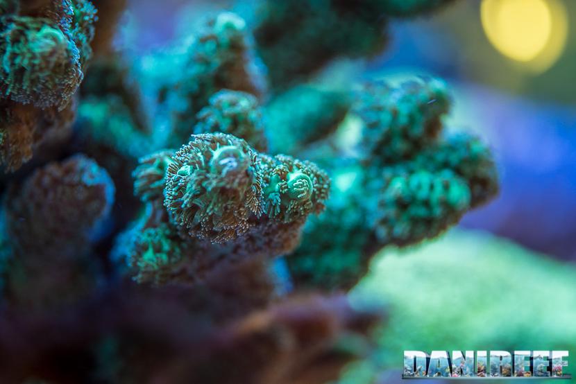 201805 dejong marinelife, interzoo, macro 76 Copyright by DaniReef