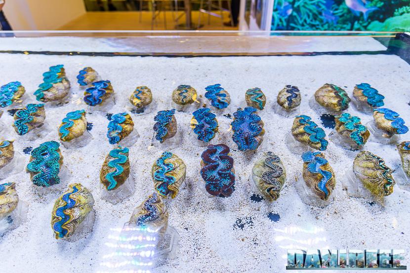201805 dejong marinelife, interzoo, tridacna 51 Copyright by DaniReef