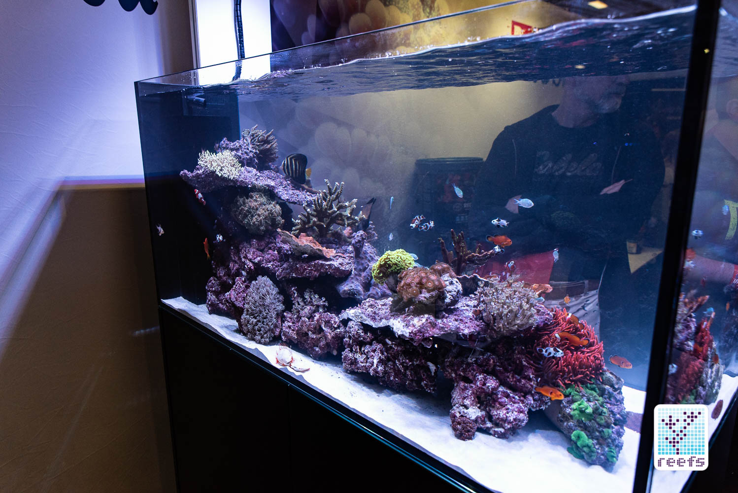 Reef a palooza ny 2018 39 s best display tanks for Google fish tank mrdoob