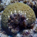 Smallscale Efforts to Help Corals Survive Bleaching Can Work