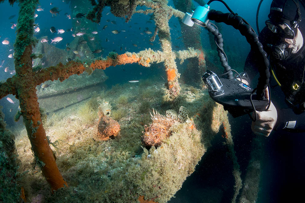 reef, wreck, frogfish