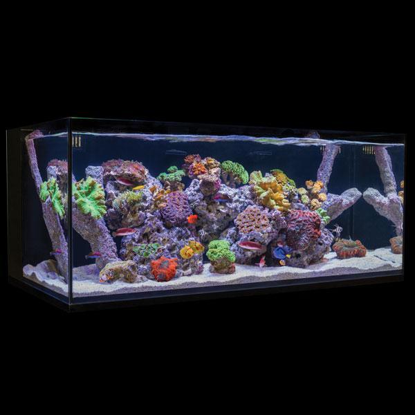 Cobalt Aquatics C-Vue Aquarium