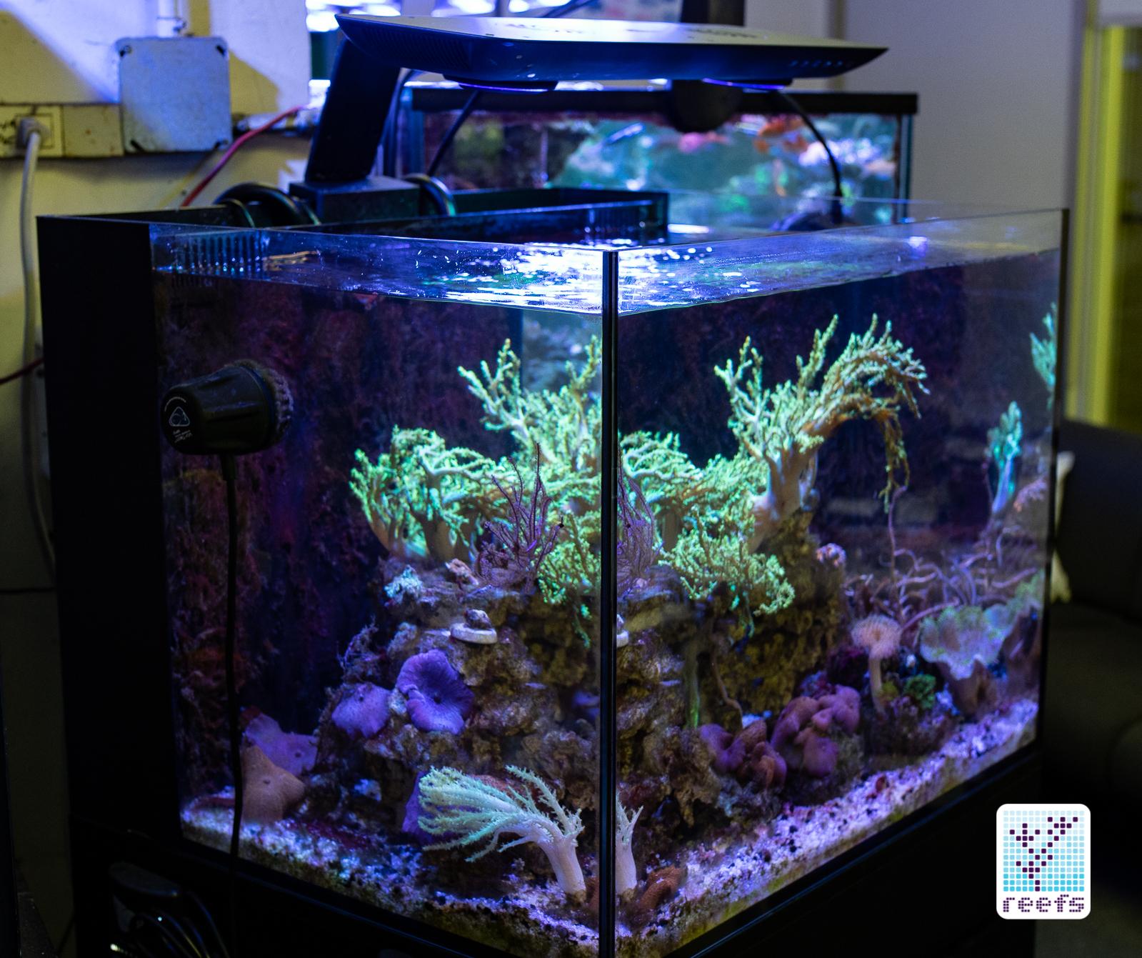 cobalt aquatics c vue aquarium kit the definitive review reefs com