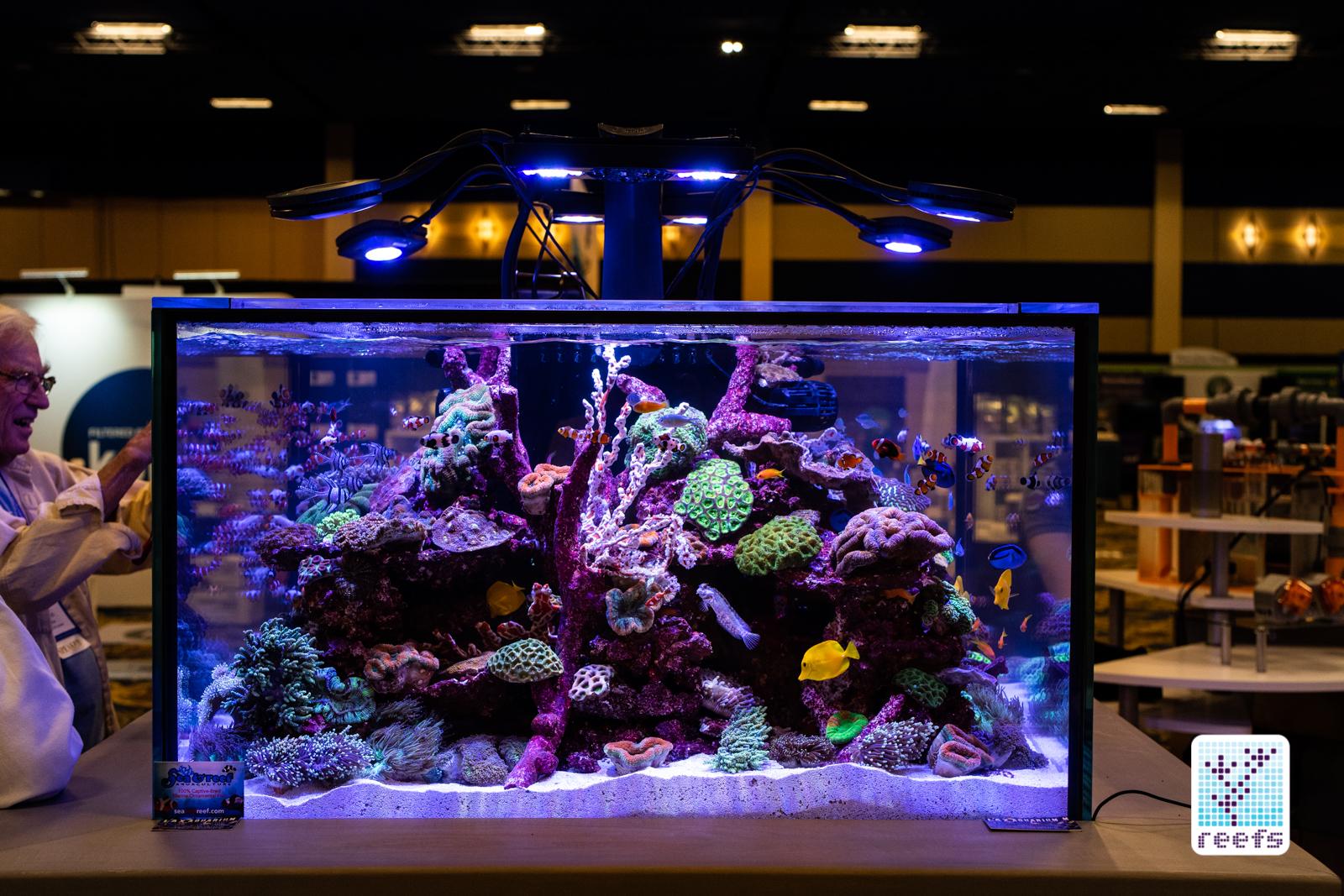 Neptune reef tank