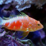 In Memoriam: Pioneering Aquarium Collector Daniel Pelicier