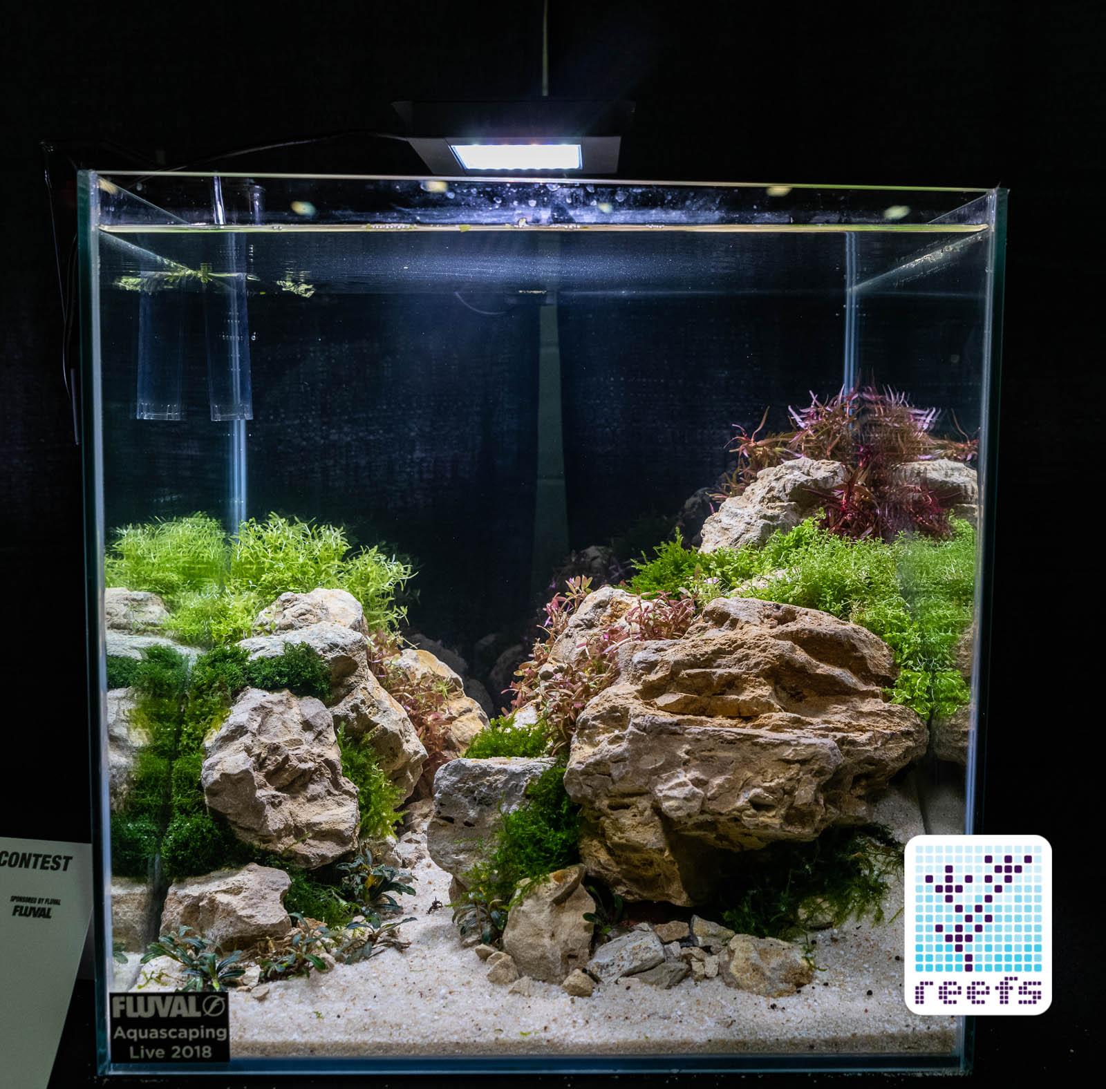 2018 Aquatic Experience Coverage Part Ii Aquascaping Contest