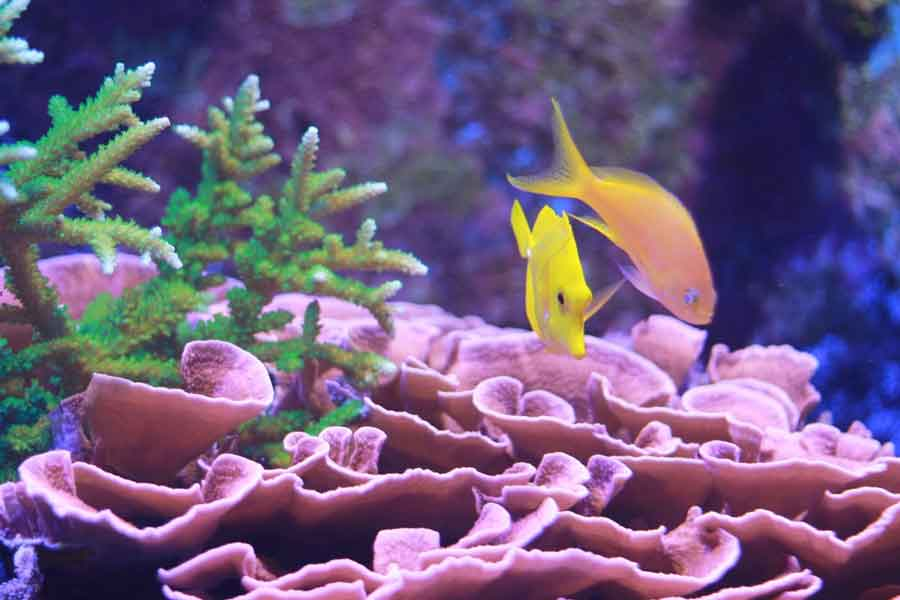 successful reef