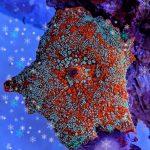 Permafrost Mushroom Is The Latest Aquarium Hotness