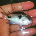 BREAKING NEWS: A Possible New Species Of Damselfish Just Found In Madagascar