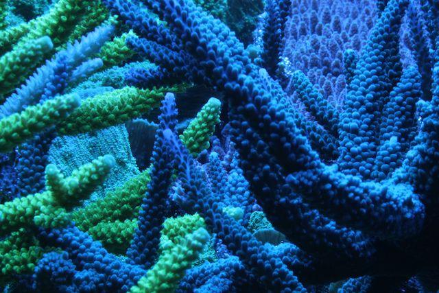 RalfPs-blue-640-2.jpg