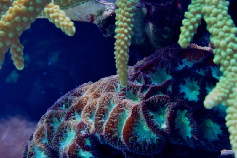 RalfPs-coral2-800-1.jpg