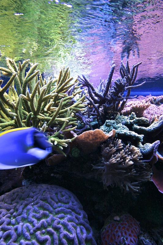 RalfPs-coral2-800-3.jpg