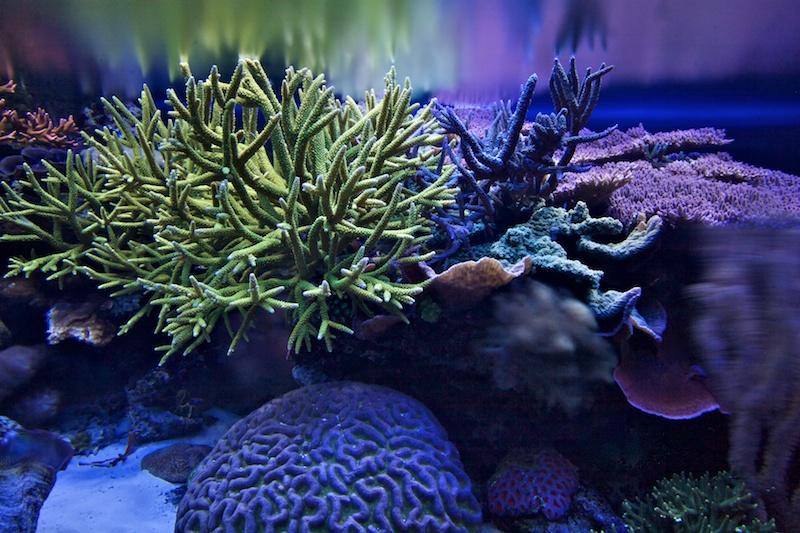RalfPs-coral2-800-4.jpg