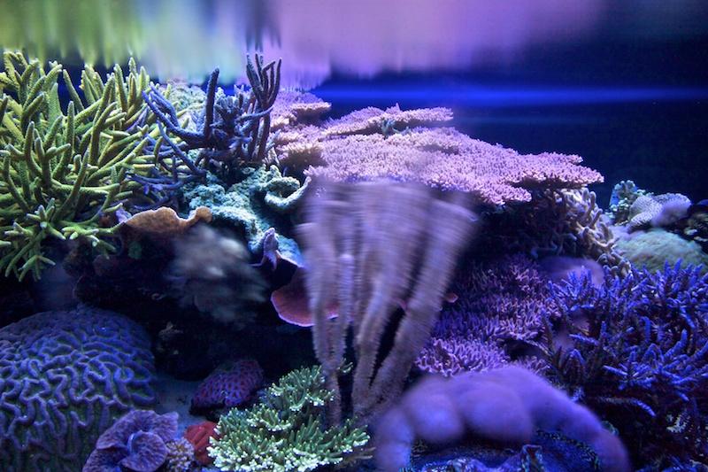 RalfPs-coral2-800-5.jpg