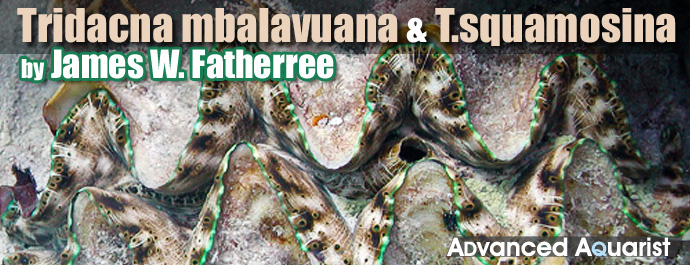 Tmbalavuana2.jpg