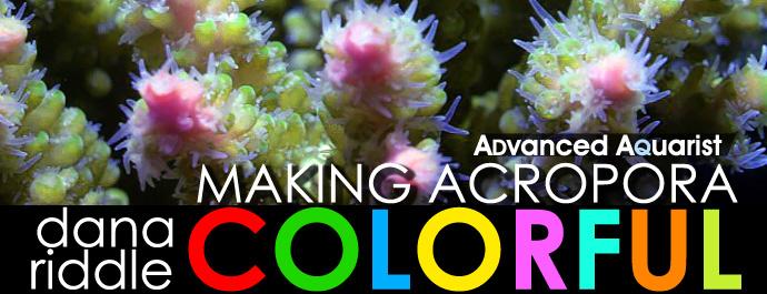 coloracro2.jpg