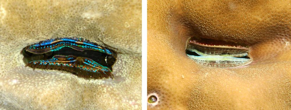 coral_clams.jpg