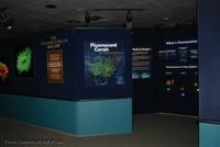 fluorescent_exhibit_entrance.jpg