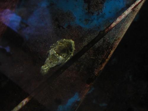 cuttlefish_image04.JPG