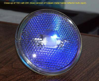 150WBlueSpot.jpg