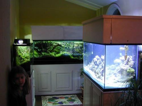 fishroom.jpg
