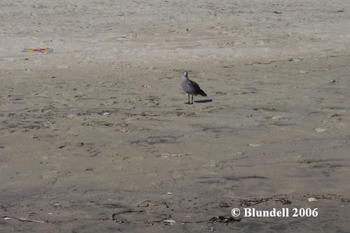 bird_watching.jpg