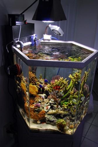 ic_aquarium_view_left_side_1.jpg