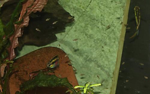aquarium5.jpg