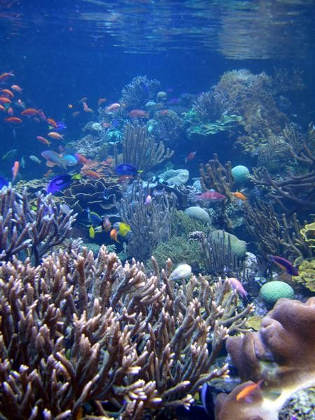reef_on_end_picture10_043.jpg