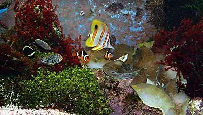 Refugium-Aquarium-web.jpg