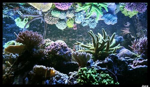 aquario_21102006_205.jpg