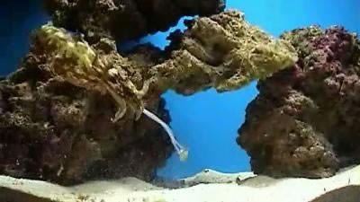 cuttlefish_image02.JPG