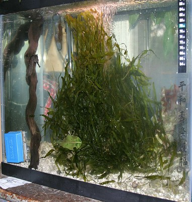 seahorse_tank.jpg