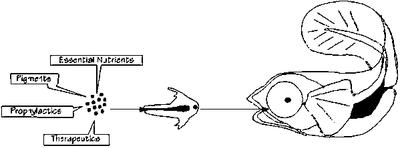 figure2.gif