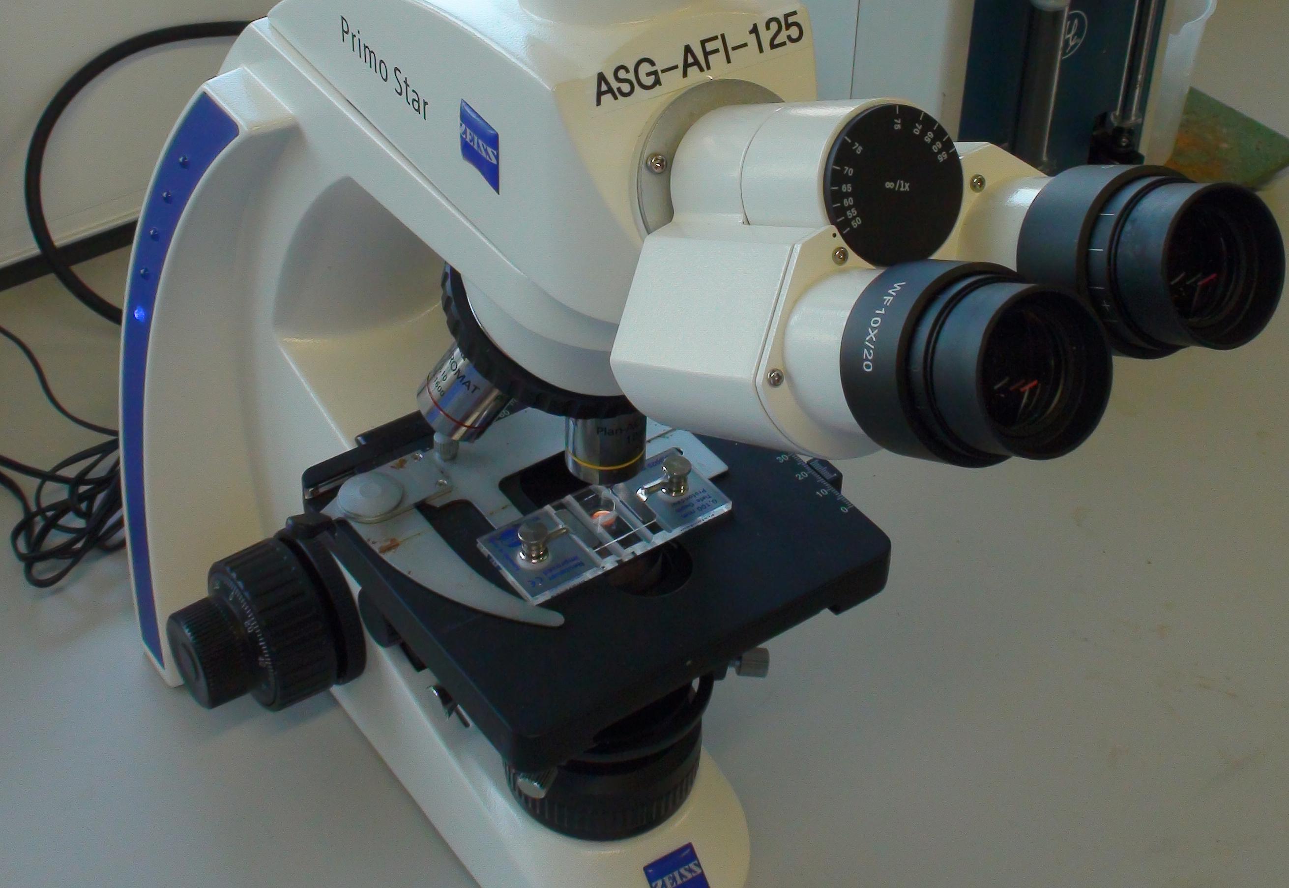 microscope_haemocytometer.jpg