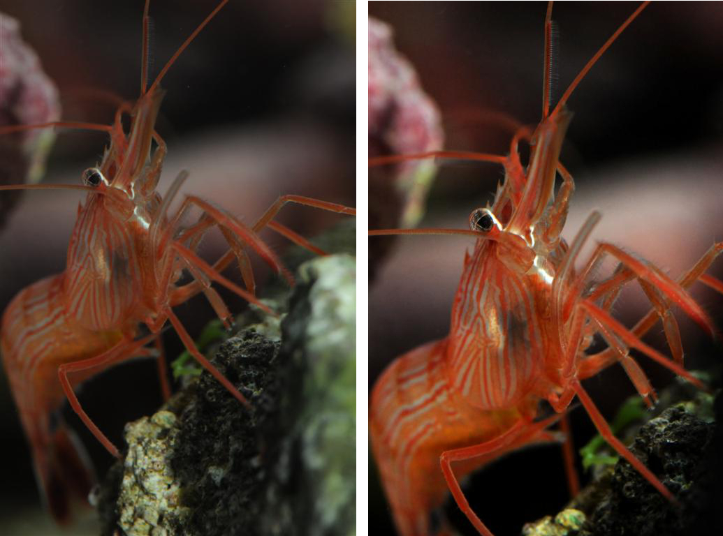 shrimp-combined.jpg